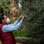 La Junta inicia los actos del 28F con una plantación simbólica de especies autóctonas en todas las provincias