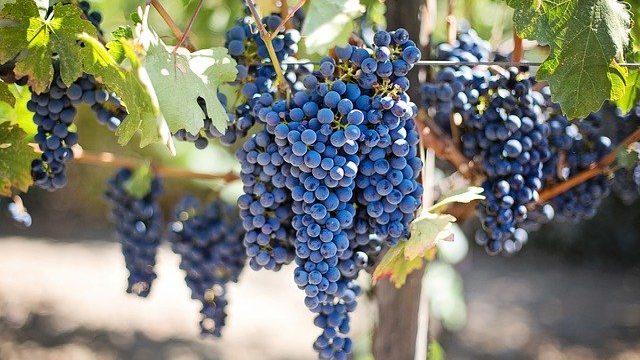 Tourism Costa del Sol study explores the potential of wine tourism in the Serrania de Ronda