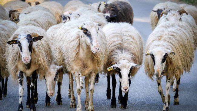 Peligros de circulación por carretera en la Serranía de Ronda