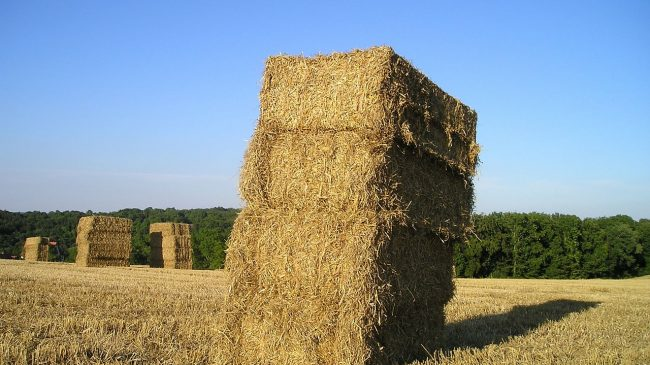 Serendipity – straw bales, double doors and a house for sale