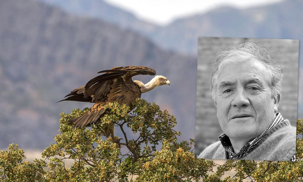 Tim Appleton MBE announced as Patron of Andalucia Bird Society