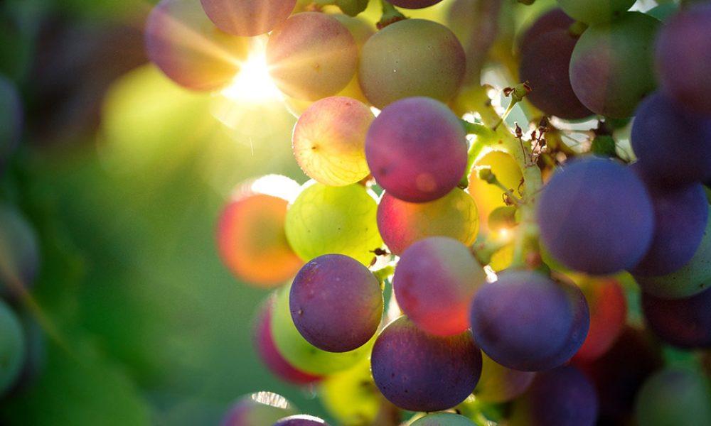 Vino andaluz, vino de calidad