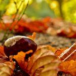 Autumn arrives in the Serranía de Ronda