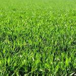 Spain… where the grass is greener – not!